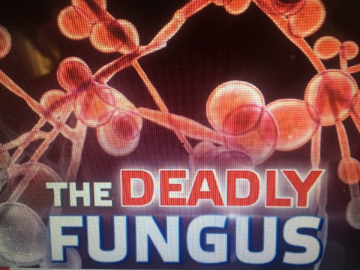 Why Keto Is The Best For Deadly Candida Auris Symptoms?